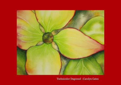 Technicolor Dogwood-Carolyn Gates